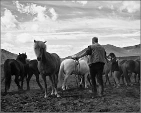 A good horse has no color