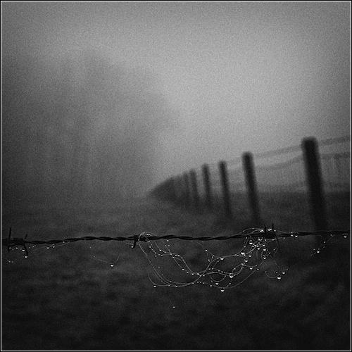 Morning dew, Vlaamse Ardennen, Belgium